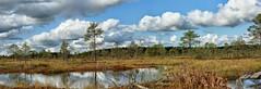 Raba / Bog, Estonia (Veeseire) Tags: raba soo bog eesti estonia loodusblogi veeblogi veeseireee