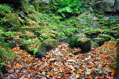 Autumn in the Quarry Garden (zawtowers) Tags: standen house garden national trust property east grinstead sussex countryside beale family william morris art craft movement quarry autumn leaves brown orange colour