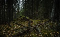 Urskog-3873 (jarud) Tags: 2018 norge norway notodden urskog