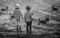 Feed the ducks (permission given) (1 of 4) (+Pattycake+) Tags: eastanglia broad people norwich moon lake mirrorless children alfresco noutdoor bw summer lumixdmcgm1 feedingtheducks candid ducks monochrome street uk evening picnic 43 norfolk uea