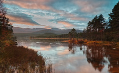 Sunrise on Loch Morlich (captures.in.time) Tags: ngc lake water trees pine scotspine scots scotland cairngorms cairngorm cairngormsnationalpark national park loch aviemore sunrise sun grass landscape light chasinglight landscapephotography ngm nationalgeographic wilderness nature wild rugged