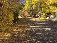 IMG_2833 (August Benjamin) Tags: provo provoriver provorivertrail fall utah mountains provocanyon fallcolors autumn trees leaves orem utahvalley jogging