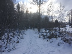 Final winter in Titisee (Black Forest, Baden, Germany) (Loeffle) Tags: 022018 germany deutschland allemagne baden blackforest schwarzwald foretnoire titisee winter schnee snow
