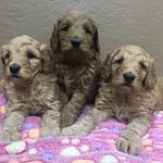 Casey's 3 girls!!
