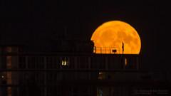 Harvest Moon (Lee Rosenbaum) Tags: harvestmoon vancouver longexposure orangemoon moonrise fullmoon moon night britishcolumbia orange lunar