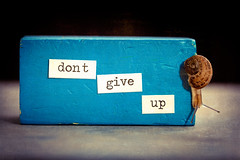 dont give up (auntneecey) Tags: snail dontgiveup series message 365the2018edition 3652018 day279365 06oct18
