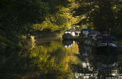 Along the Kennet & Avon Canal (zolaczakl) Tags: kennetavoncanal wiltshire avoncliff canal 2018 autumn england jeremyfennellphotography lightshadow nikond800 october photographybyjeremyfennell reflections southwest uk trees woodland nikonafsnikkor24120mmf4gedvrlens