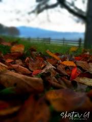 herbstliche Impressionen (skistar64) Tags: herbst autumn natur nature daham drausen outdoor pisweg kärnten carinthia