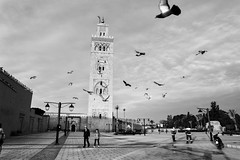 Once upon a time in Marrakech ~ (~mimo~) Tags: travel africa people ohotography street blackandwhite birds square mosque marrakech morocco