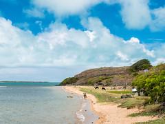 P1010080.jpg (cédricpeltier) Tags: voyage océan rodrigues faune paysage plage portsudest
