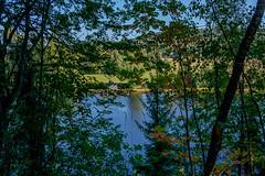 03092018-DSCF1029-2 (Ringela) Tags: österdalälven leksands rastplats september 2018 sweden river nature tree fujifilm xt1
