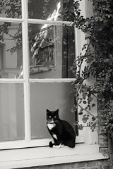 Le chat sur le mur  (et le chat devant la fenêtre) 😺 (RW-V) Tags: canoneos70d canonef50mmf14usm zutphen chat cat poes kat katze fenêtre window fenster raam bw nb sw zw noiretblanc monochrome sooc 100faves 150faves 175faves 200faves 225faves 250faves 275faves 300faves 325faves 350faves 375faves 400faves 5000views 425faves