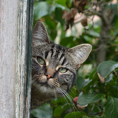 The bird house is mine... (johco266) Tags: poes kat cat cats katze animal pet garden nikon macro chat coth alittlebeauty coth5