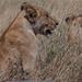 Safari Flickr (198 of 266)
