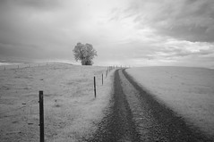 Bavaria (IR) (F. Neil S.) Tags: field rural farm farmland southerngermany bavaria tree graveldrive fenceline bird clouds blackandwhite blancetnoir monochrome sony nex6 fullspectrumconversion hoya r72 720nm filter summer