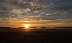 _DSC9545-HDR.jpg (thomasresch) Tags: sun nordhaide panzerwiese nebel hartelholz sunrise sonne sonnenaufgang