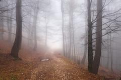 Vibes (George Pancescu) Tags: bratocea forest ciucas mountain massif romania nature natural outdoor fog mist misty foggy serene peaceful silence landscape trees nikon d810 70200mm