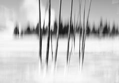 (tohlfer) Tags: art abstract blackandwhite blackandwhitelandscape icm nationalpark nature blur blurtree intentionalcameramovement