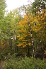IMG_6318 (sjj62) Tags: fishcreekwi doorcountywi fall autumn woods doorcounty fishcreek 40d