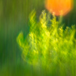 Golden hour abstract thumbnail
