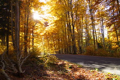 On the edge of the road (Baubec Izzet) Tags: baubecizzet pentax nature autumn light road trees flickrunitedaward