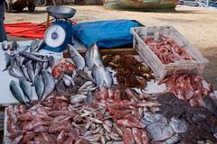 Fish (pan_orama) Tags: marokko maroc morocco essaouira beach harbour seagulls fish sun color travel