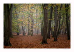 Beeches (Christopher Pope Photography) Tags: beechtrees woodlands aldershot woods hampshire aldersot autumn christopherpopechristopherpopephotography beeches trees seasons