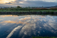 SJ1_1271 - 'Splash' (SWJuk) Tags: burnley england unitedkingdom swjuk uk gb britain lancashire canal leedsliverpoolcanal straightmile water flat calm reflections clouds dawn daybreak sunrise colourful towpath 2018 sep2018 autumn landscape waterscape nikon d7200 nikond7200 18300mm rawnef lightroomclassiccc