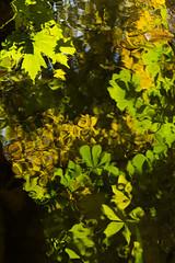Reflected Canopee (Martin Juan VW) Tags: alhambra granada generalife españa arrollo green agua rio river forest reflection mirage andalucia spain acequia aqueduct nut chess horse platania albaicin martin juan vilar welter