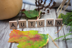 autumn -1.jpg (marcoverch) Tags: autumn plant symbol season letters leaf design fall texture