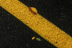 yellow on the road !!! (yasin.orhan) Tags: yellow line leaves