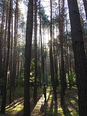 Morning in the woods (rromanivna) Tags: ukraine green forest shiny morning fresh nature trees woods