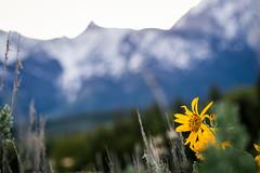 Grand Teton National Park (frederickson.jpg) Tags: jackson wyoming unitedstates us national park nationalpark grand teton grandteton grandtetonnationalpark mountain mountains