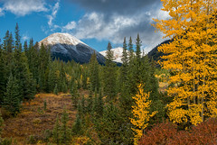 Mosquito Gulch (RkyMtnGrl) Tags: landscape nature scenery vista mountains conifers aspens clouds gulch valley autumn fall 2017 mosquitogulch fairplay colorado nikon 28300mm