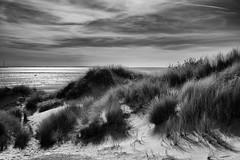 Dunes (g_heyde) Tags: dunes northsea zeeland dünen netherlands blackandwhite xpro2 nordsee beach strand westerschouwen