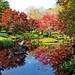 reflections at Monet's Bridge - 11-7-18