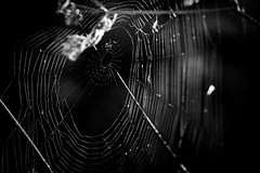 No One At Home...? (wowafo) Tags: sonyalpha6000 sonyflickraward herbst autumn fall natur nature makro macro blackwhite spinnennetz spinne spider spiderweb