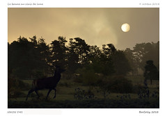 Cerf | Deer (BerColly) Tags: france auvegne cantal cerf deer nuit night lune moon foret forest arbre tree brouillard frog bercolly google flickr