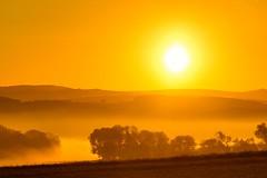Foggy sunset ️ (GE.86) Tags: sunshine sunset sunnyfog sonnenschein sonnenaufgang nebel nikkor18105 nikond5300 tree lanscapephotograpie landscape landschaft