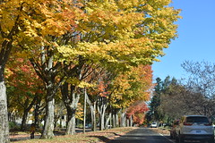 all the colors of fall (wolf8_us) Tags: travelswashingtonstate trees fall olympia