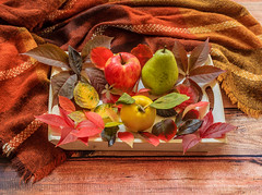 Autumn composition,colorful leaves, apple,pear and quince on wooden plate and blanket (zaklina.miljkovic) Tags: apple autumn autumnmood background blanket bright brown colorful composition dark decoration fall foliage golden happy leaf leaves natural orange pattern pear plate quince red rough rustic season texture tranquil variety wooden yellow