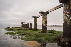 _DSC3979 (@camilografo) Tags: isla negra algarrobo chile