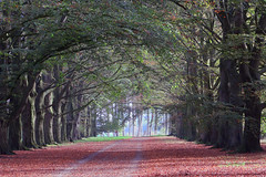 Autumn impression (roland_tempels) Tags: beverenwaas hoftersaksen belgium nature autumn trees lane supershots