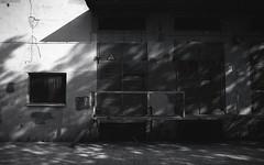 (querido_amigo) Tags: analog film pentax blackwhite black white rollei infrared