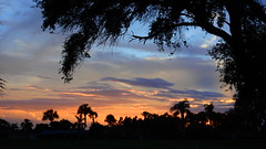 Orange and Blue Sunset (Jim Mullhaupt) Tags: sunset sundown dusk sun evening endofday sky clouds color red gold orange pink yellow blue tree palm outdoor silhouette weather tropical exotic wallpaper landscape nikon coolpix p900 jimmullhaupt manateecounty bradenton florida cloudsstormssunsetssunrises photo flickr geographic picture pictures camera snapshot photography nikoncoolpixp900 nikonp900 coolpixp900