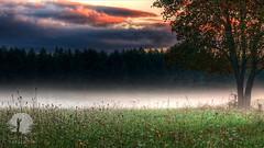 Misty morning (warmianaturalnie) Tags: nature tree forest landscape outdoors scenics sunset fog grass sky meadow morning beautyinnature summer season ruralscene sunlight sunrisedawn woodland autumn warmianaturalnie warmia krajobraz mgła poranek