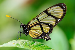 Butterfly up close (billcoo) Tags: bokeh insect macro 6d2 6dii 2