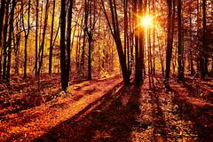 Autumn morning (prokhorov.victor) Tags: утро природа рассвет пейзаж лес осень деревья растения флора солнце свет