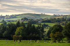 The village of Wentnor, Shropshire (Baz Richardson (now away until 26 Oct)) Tags: shropshire wentnor villages landscapes countryside farmland sheepgrazing
