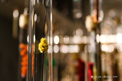 Yellow Pipecleaner (jenelle.melchior) Tags: glass yellow pipecleaner fuzzy bokah tacoma test tube metal abstract art museum